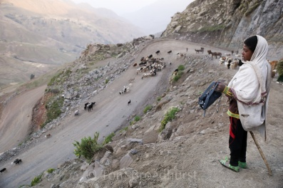 Local boys guides his flock home in Abuna Yosef, Ethioipa. Many young children in the Ethiopian highlands are given responsibility for herding their family's cattle, goats, sheep and 'shoats' in the mountains each day, contributing to the family income yet frequently hindering their education. Copyright Tom Broadhurst.