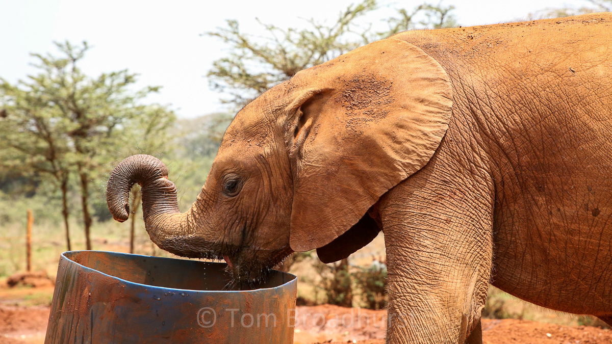 Enkesha drinking at DSWT